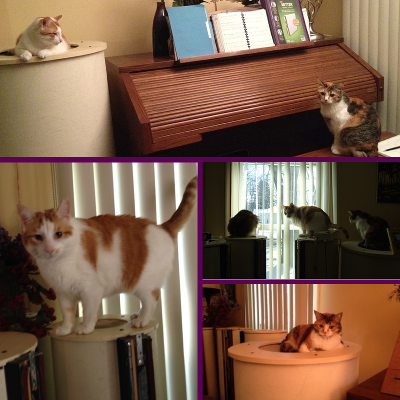 Cats on organ speakers