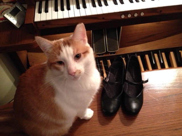 My cat Buster with my OrganMaster organ shoes