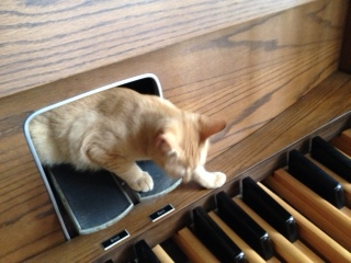 Kitten coming out of the organ