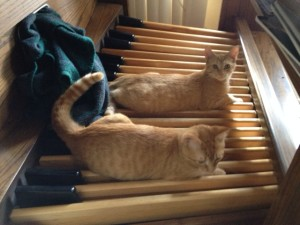 Kittens on the organ pedals with blanket in the opening