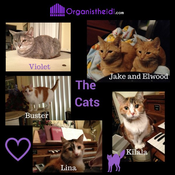 The Cats of Organist Heidi