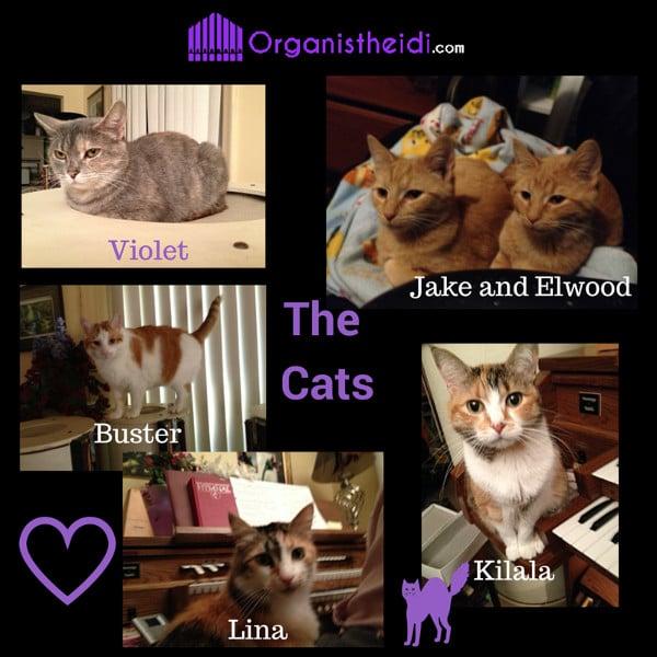 The Cats of Organist Heidi